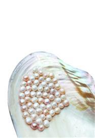U乐娱乐官网珍珠水分惊人 标价万元项链300就卖