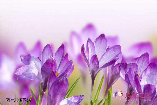 2014春夏流行色之兰花紫